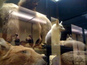 The Walter Rothschild Zoological Museum