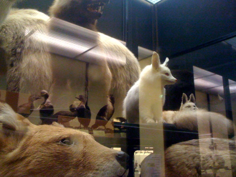 The Walter Rothschild Zoological Museum at Tring
